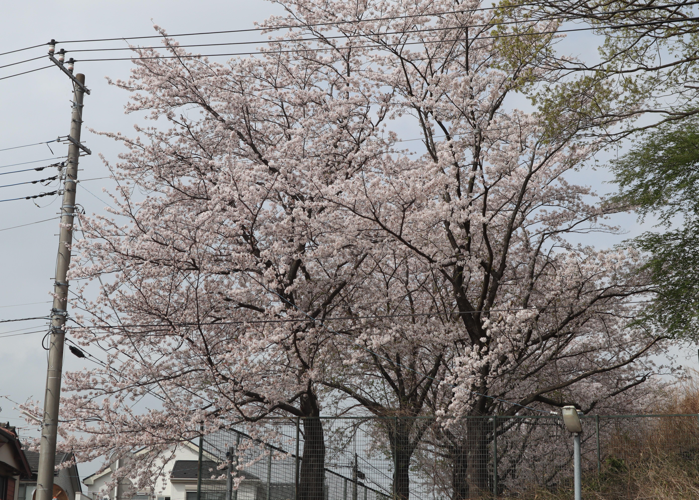お花見☆彡